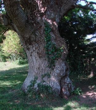 ëtre habitant dans le chêne être de la nature