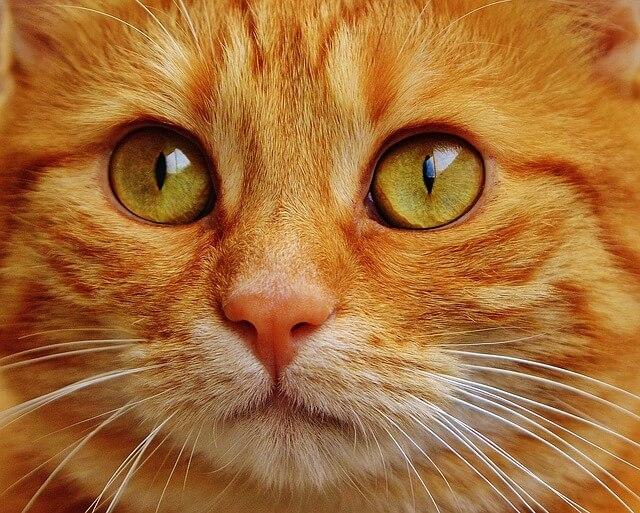 consultation chat gardien